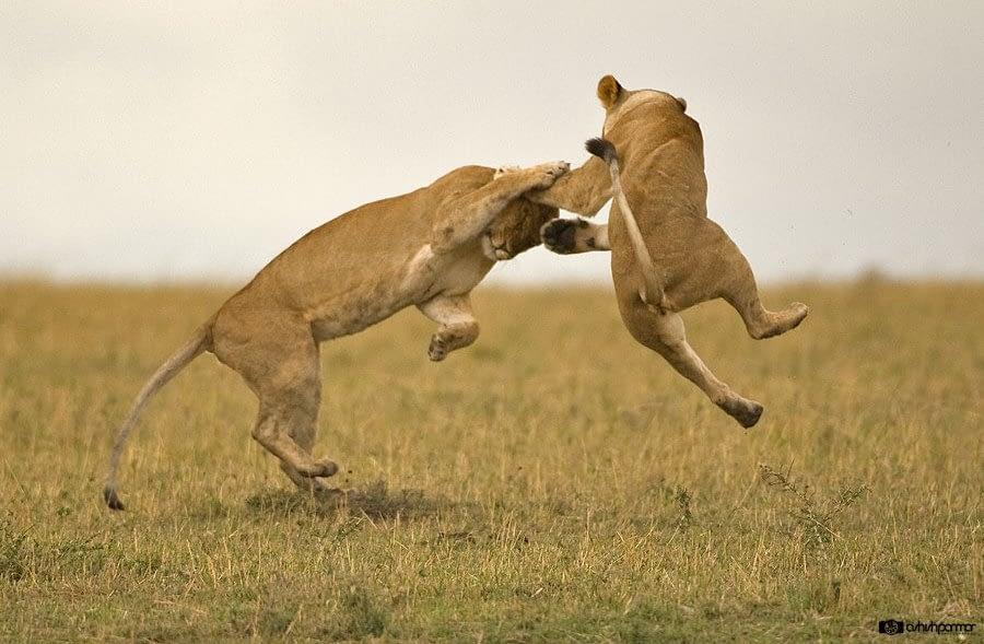Masai Mara...Photography Safari 1 c