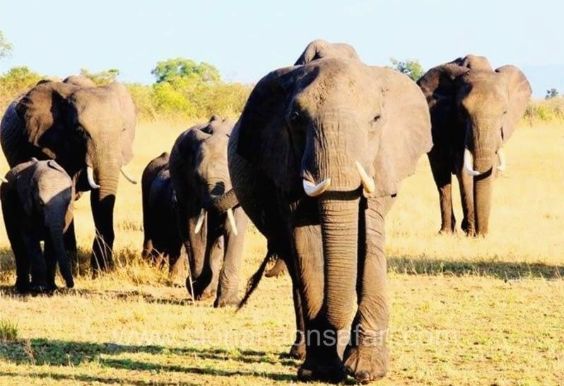 Kenya Great Rift Valley Parks Safari