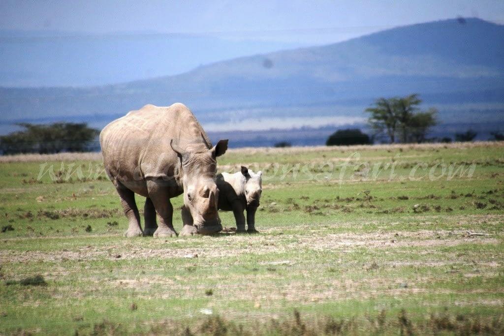 Kenya Forest Parks safari 11