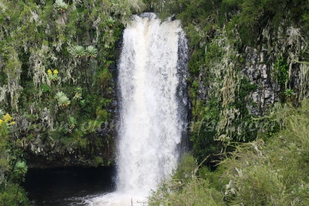 Kenya Forest Parks safari 3