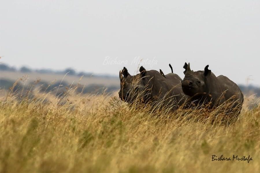 Kenya Great Rift Valley Parks Safari 1