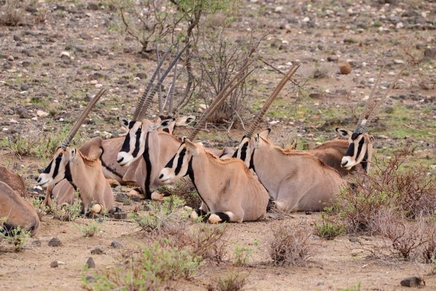 Kenya Forest Parks safari 4