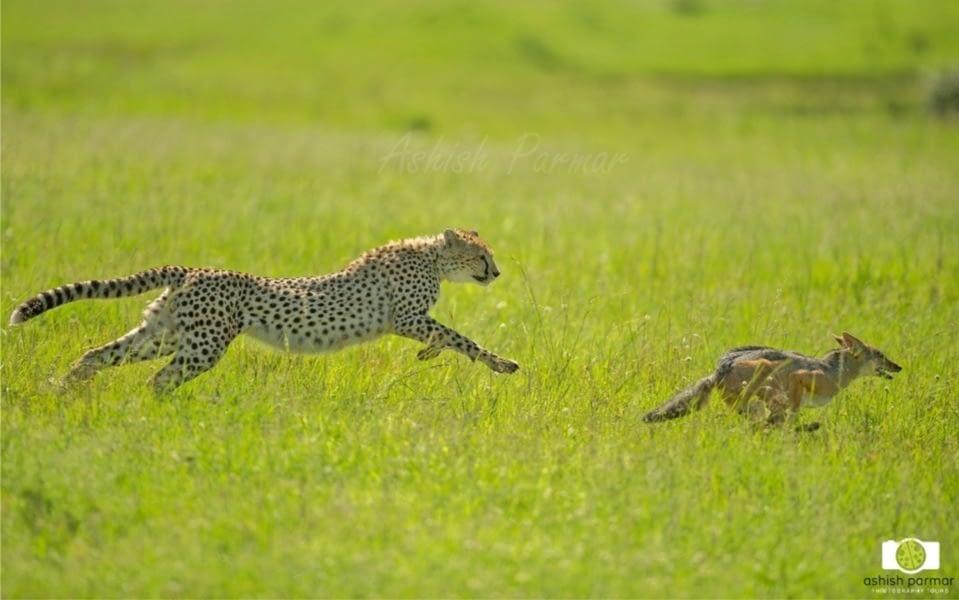 Wild Games Masai Mara - Ashish Parmar