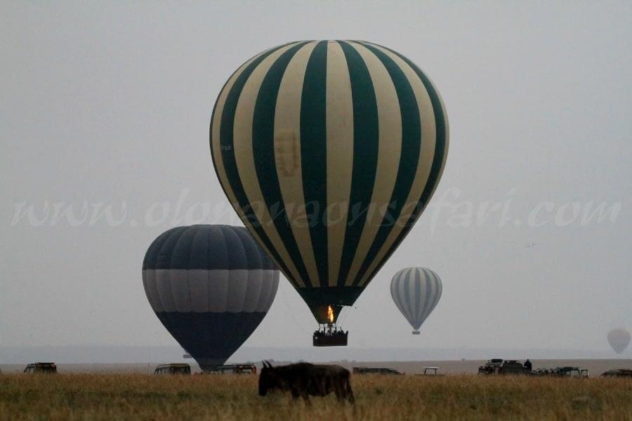 Masai Mara National Reserve - My Take 5