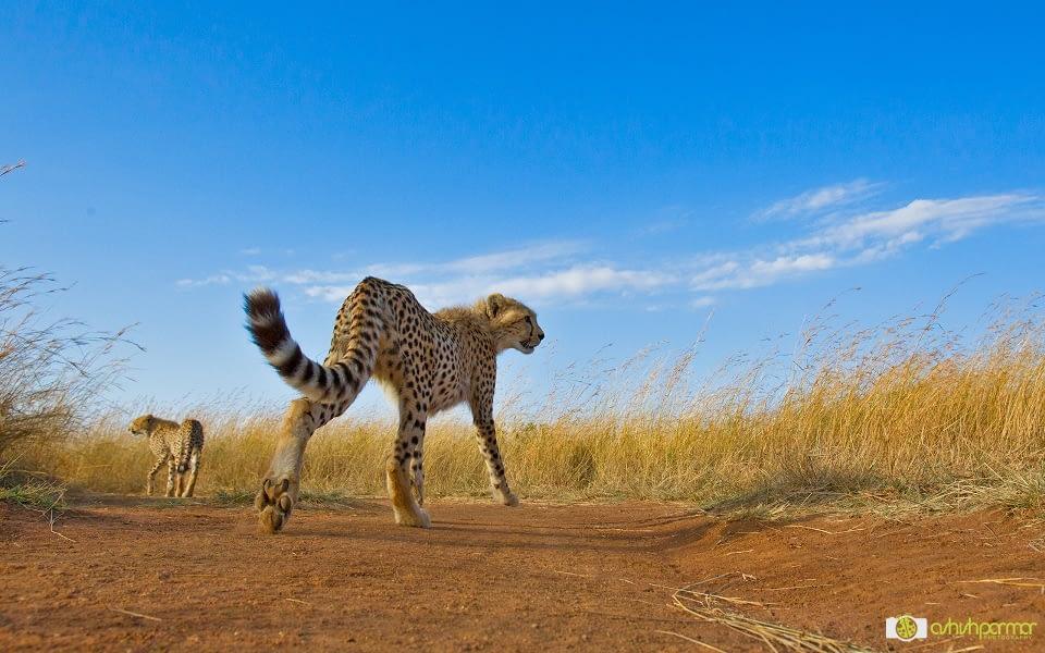 Masai Mara...Photography 1 f