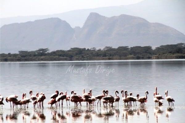 Lake Elementaita, Birds, Sleeping Warrior 3