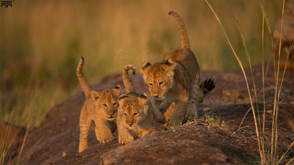 Masai Mara...Photography 1 k