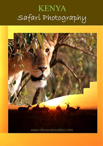 Kenya Safari Photography