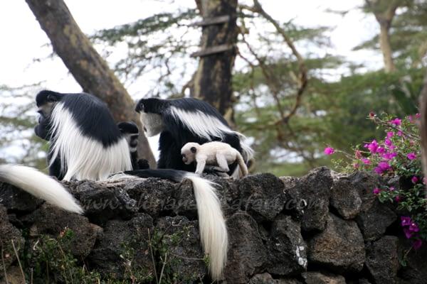 Off the beaten roads, Kenya Safari 2