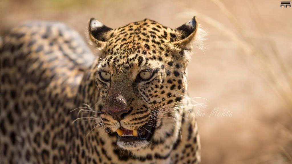 Masai Mara...Photography 1 l