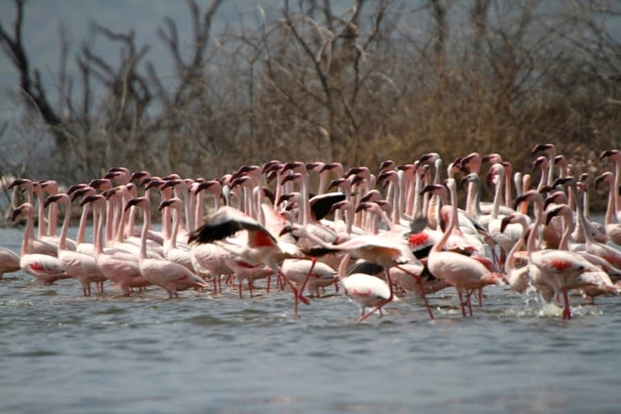 Lake Bogoria and Lake Baringo 4