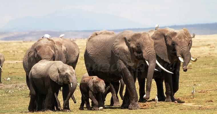 Amboseli National Park – Elephant Country