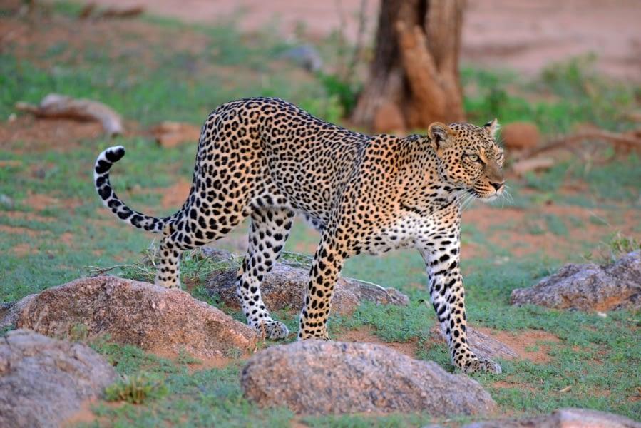 Kenya Forest Parks safari 5