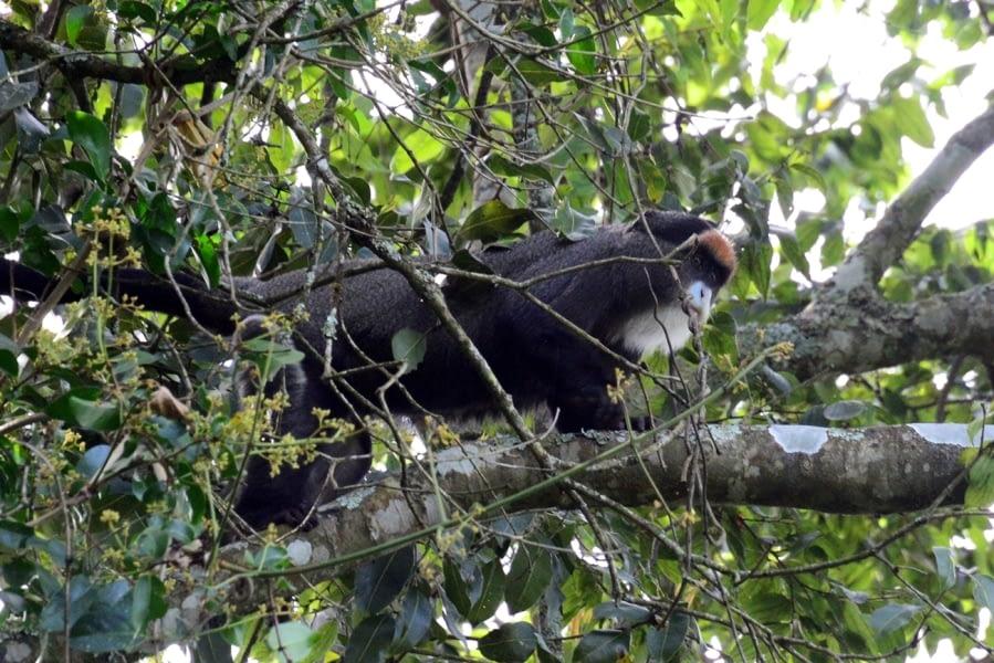 Kenya Forest Parks safari 18