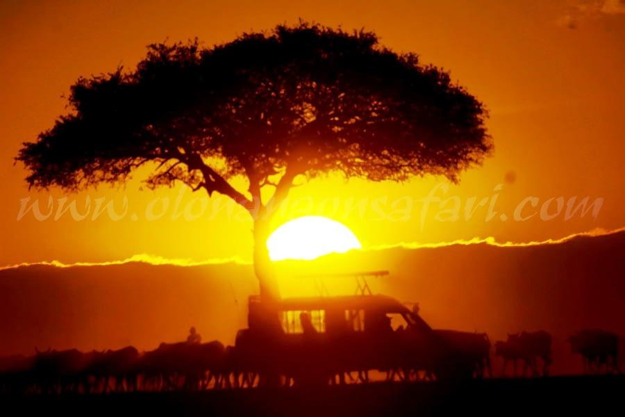 Masai Mara National Reserve - My Take 6
