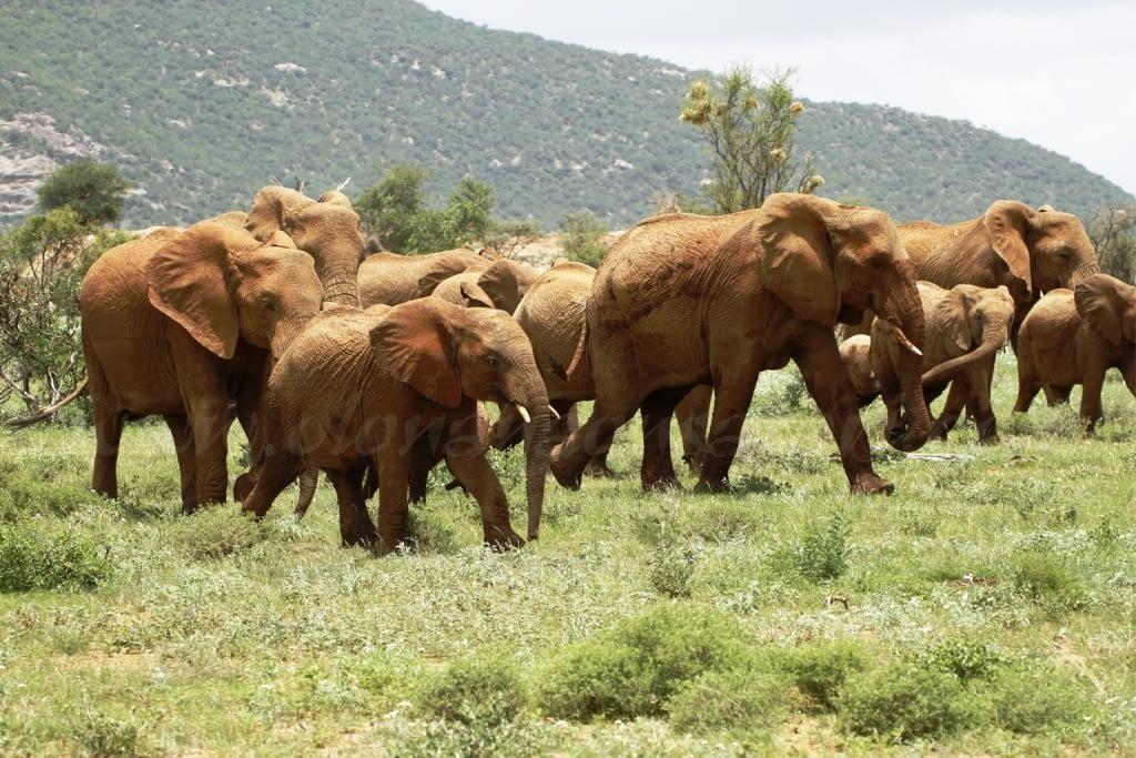 Samburu National Reserve 2