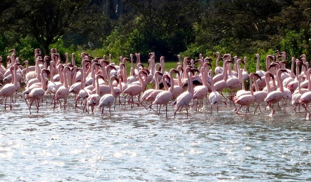 Hell's Gate National Park & Naivasha Captivations 3