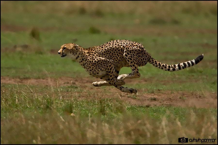 Masai Mara...Photography 1 e