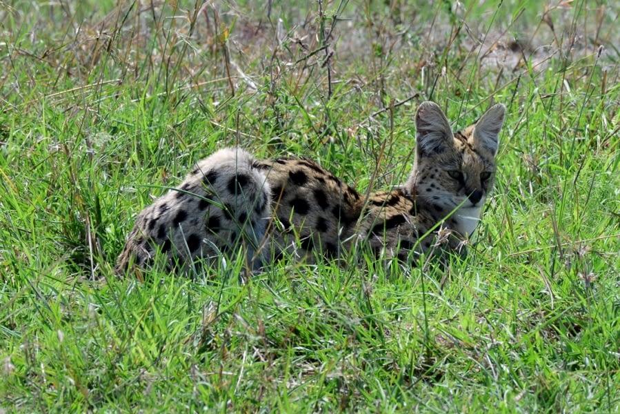Kenya Forest Parks safari 25