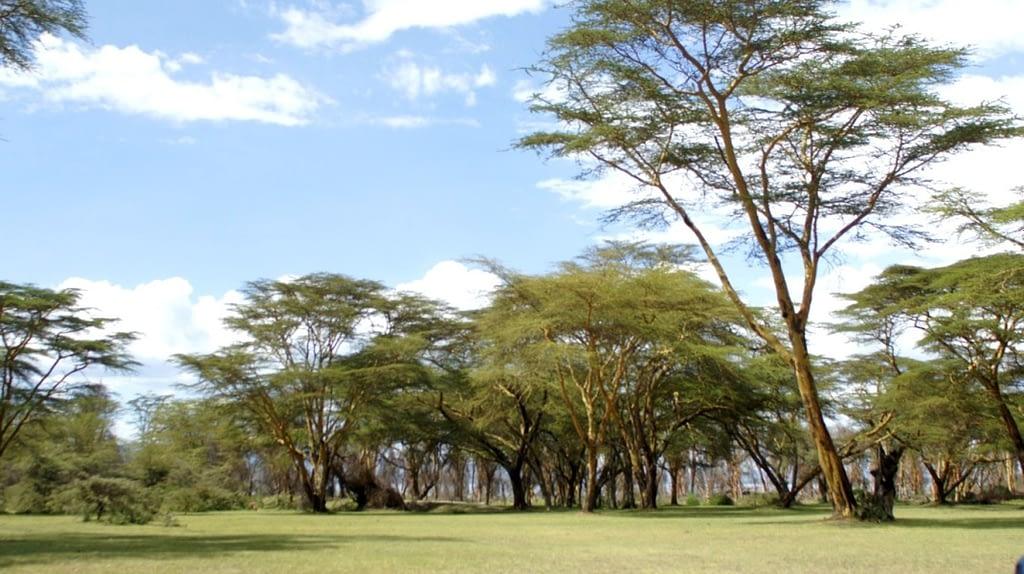 Hell's Gate National Park & Naivasha Captivations 1