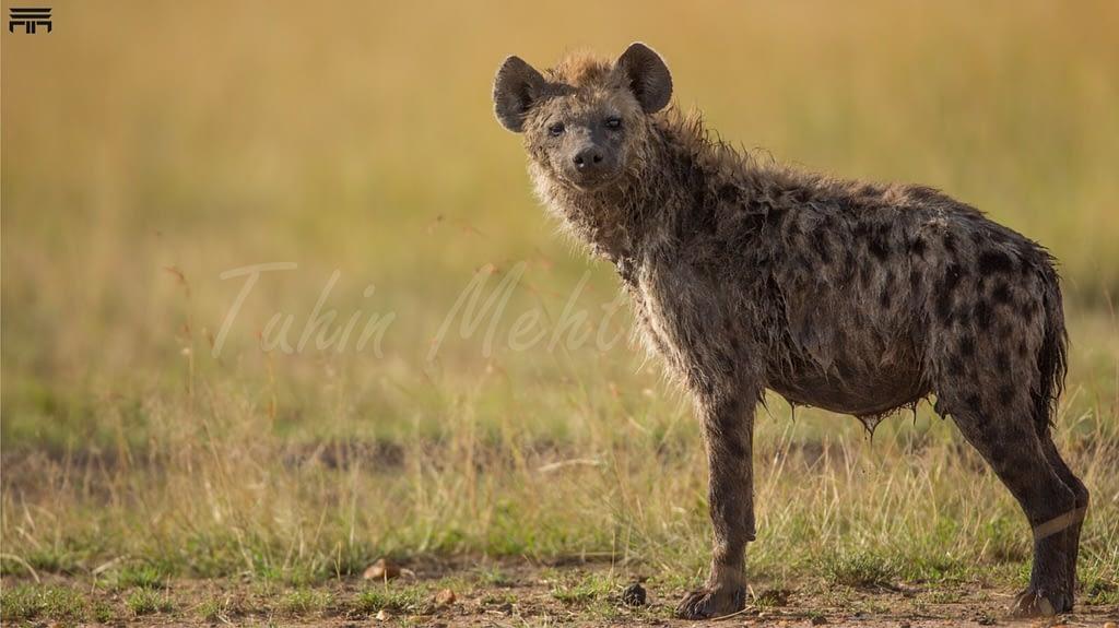 Masai Mara...Photography 1 g
