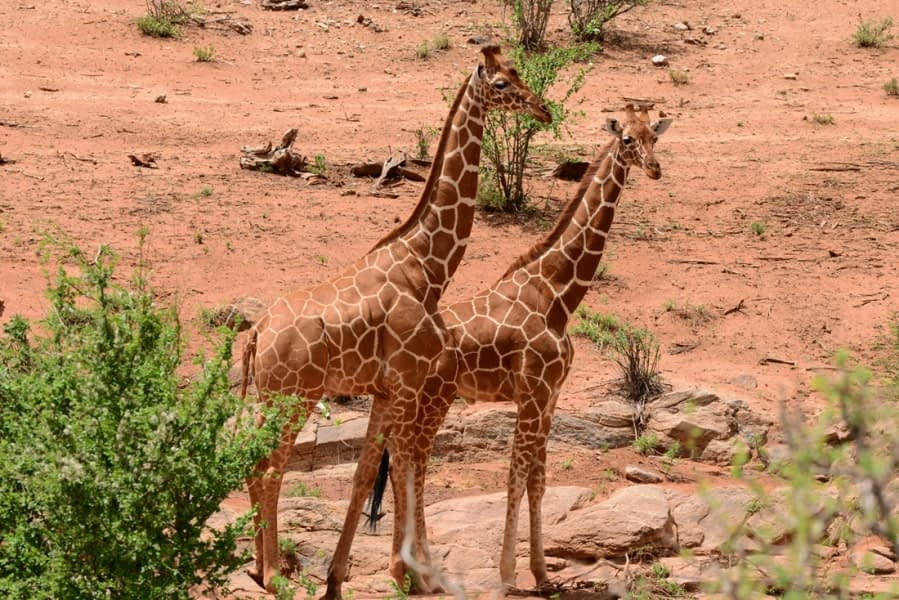 Kenya Forest Parks safari 6
