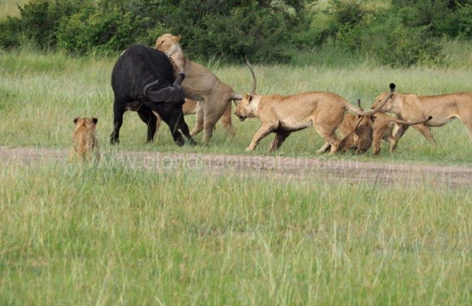Kenya Great Rift Valley Parks Safari 2