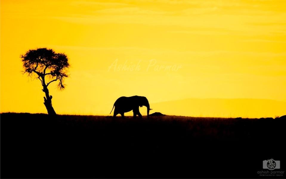 Masai Mara Elephant - Ashish Parmar