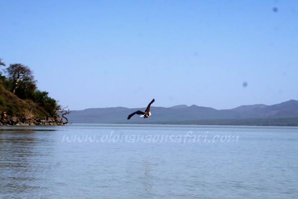 Baringo lake scenery