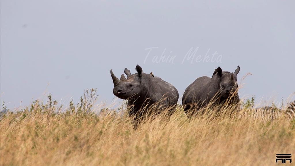 Masai Mara...Photography 1 i