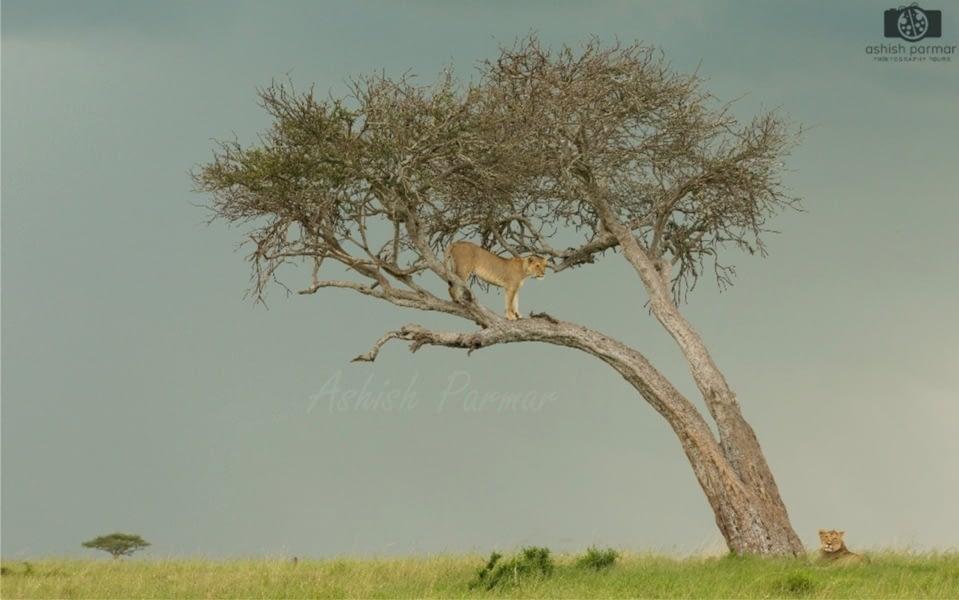 Masai Mara Photography Safari 2 g