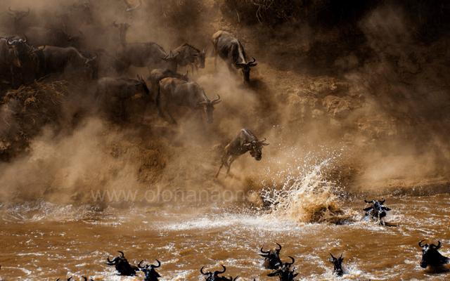 Masai Mara Wildebeest Migration 8