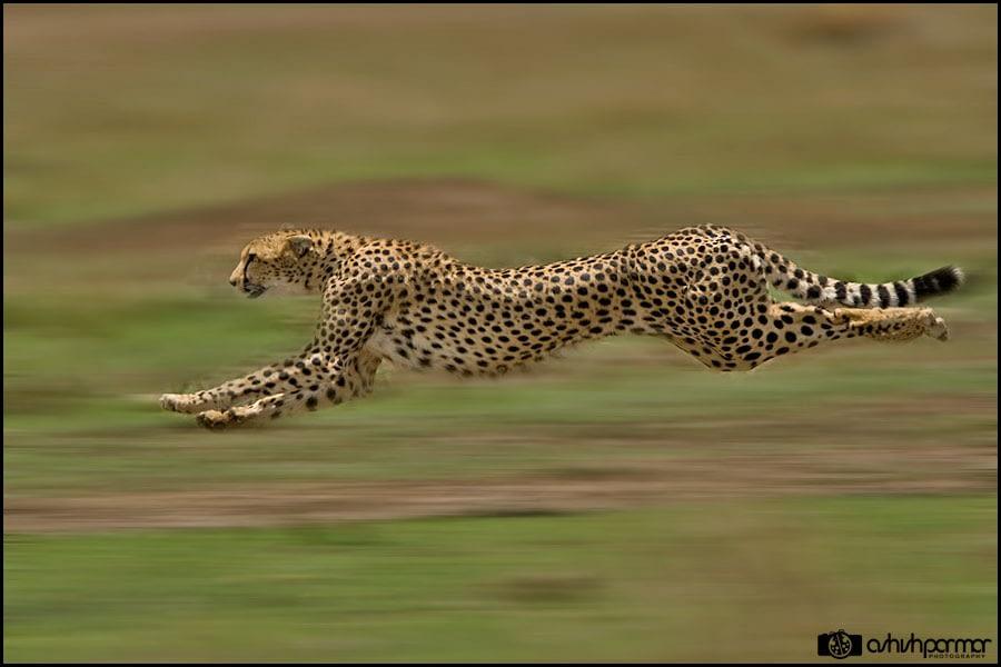 Masai Mara...Photography 1