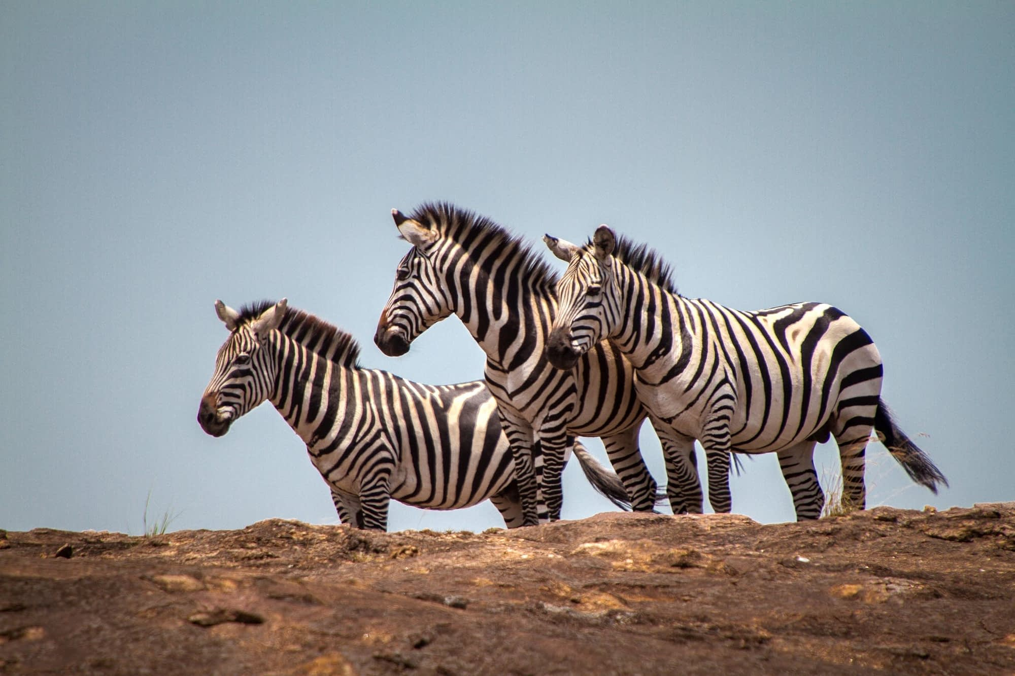 Masai Mara, 2020