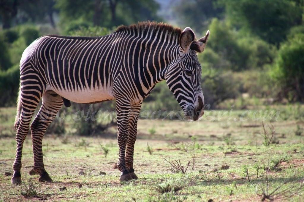 Kenya Forest Parks safari 7