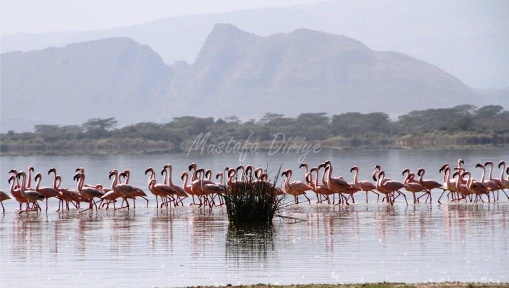 Lake Elementaita, Birds, Sleeping warrior….