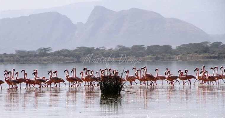 Lake Elementaita, Birds, Sleeping warrior….