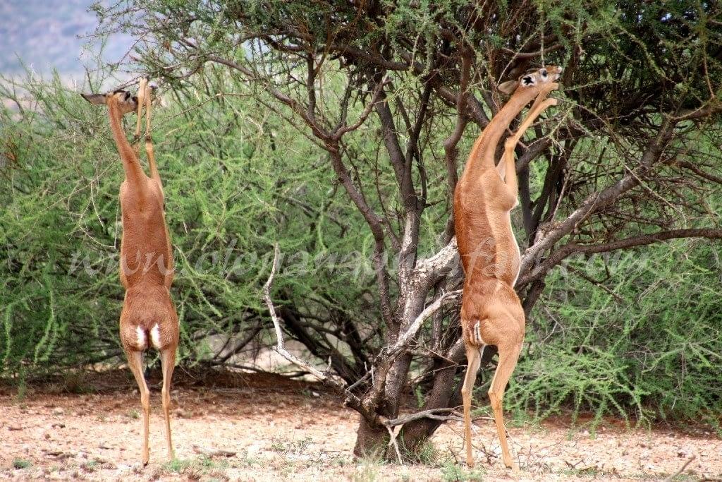 Kenya Forest Parks safari 9