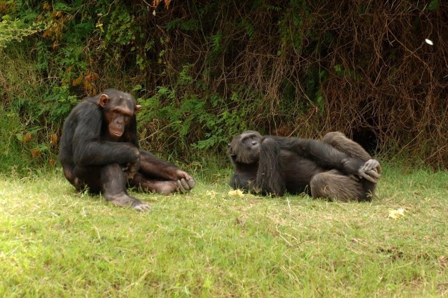 Kenya Forest Parks safari 13