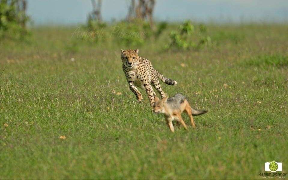 Masai Mara Photography Safari 2 e