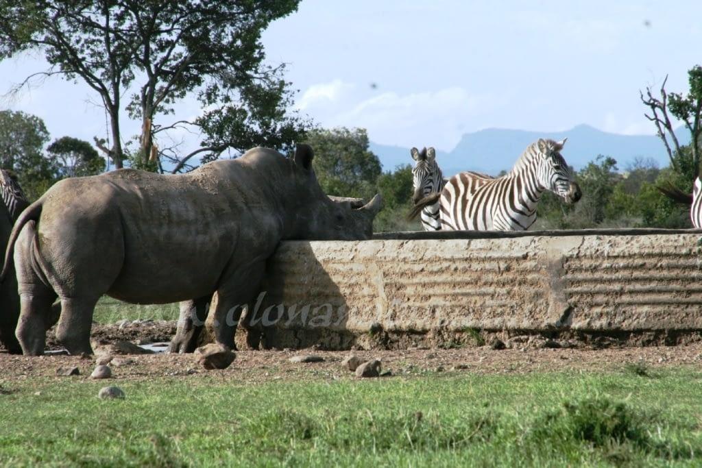 Kenya Forest Parks safari 15