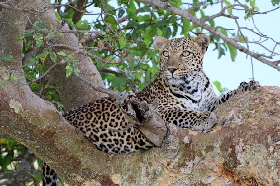 Kenya Forest Parks safari 26