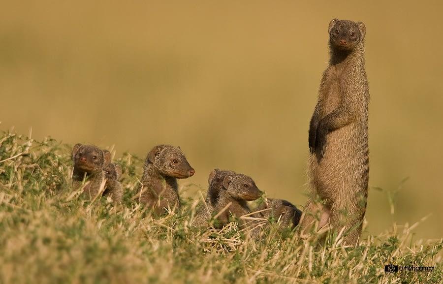 Masai Mara...Photography Safari 1 b