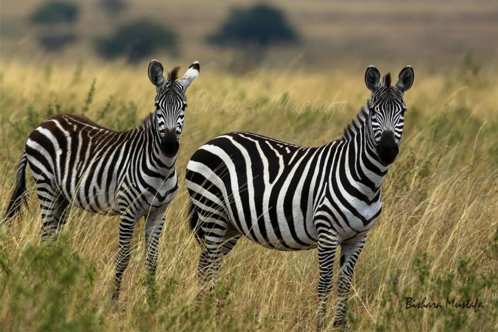 Masai Mara...Photography 1 m