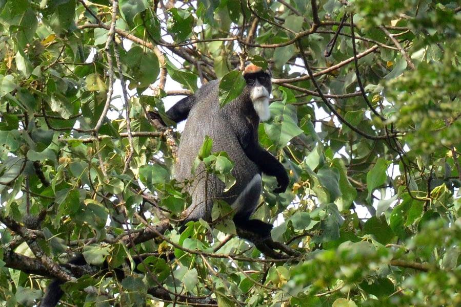 Kenya Forest Parks safari 17
