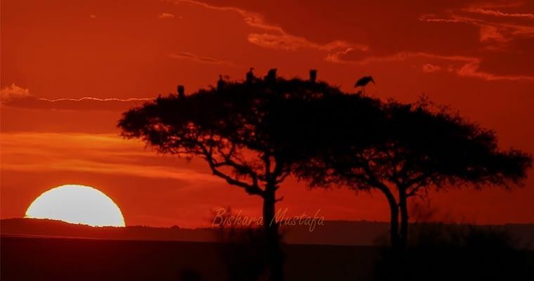 Masai Mara…Photography Safari 1