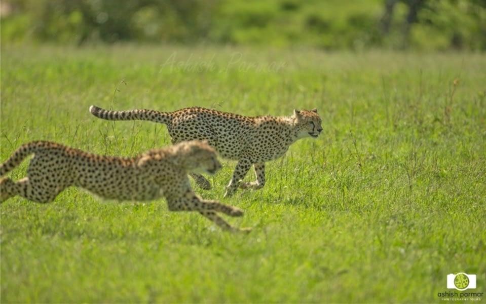 Masai Mara Photography Safari 2 c