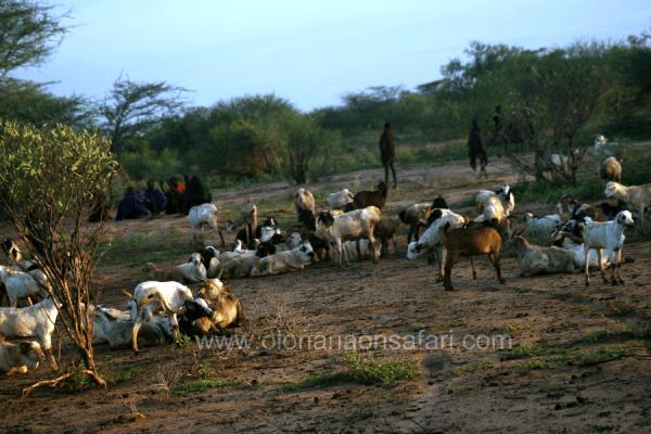Northern Kenya Community