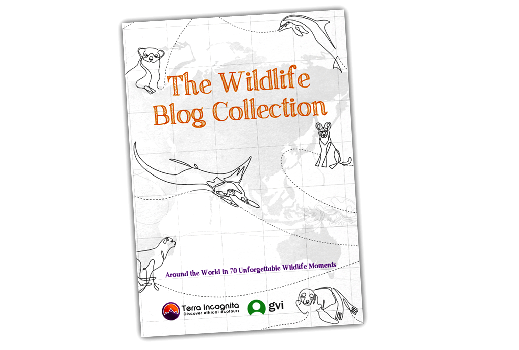 Wildlife Blog Collection – Grab your copy!