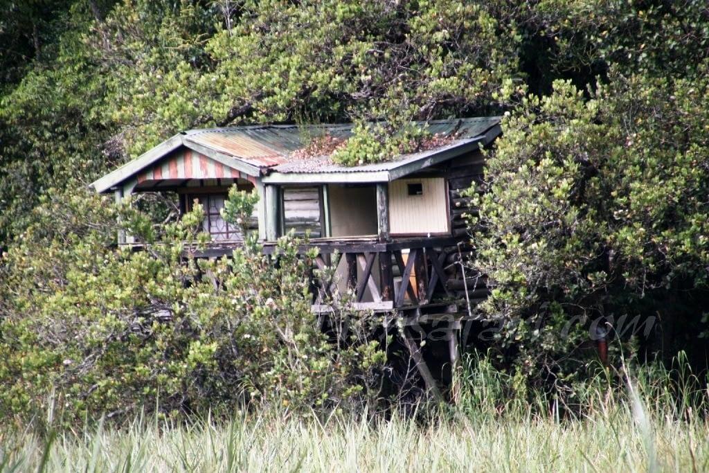 Kenya Forest Parks safari 20